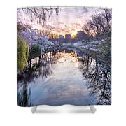 Cherry Blossom Dawn Shower Curtain by Susan Cole Kelly