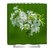 Cherry Blossom Featured 3 Shower Curtain