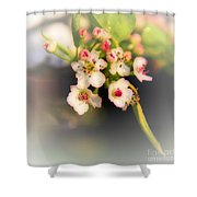 Cherry Blossom Flowers Shower Curtain