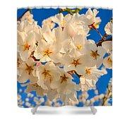 Cherry Blossom Macro Shower Curtain
