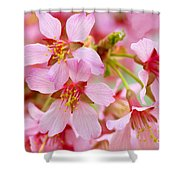 Cherry Blossom Special II Shower Curtain