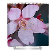 Cherry Blossom Special Shower Curtain