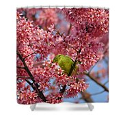 Cherry Blossom Time Shower Curtain