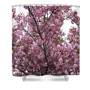 Cherry Blossoms 2 Shower Curtain
