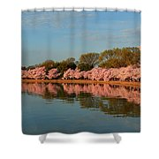 Cherry Blossoms 2013 - 001 Shower Curtain