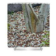 Cherry Blossoms 2013 - 002 Shower Curtain