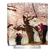 Cherry Blossoms 2013 - 006 Shower Curtain