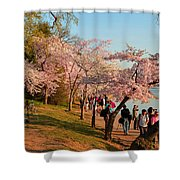 Cherry Blossoms 2013 - 007 Shower Curtain