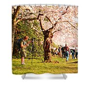 Cherry Blossoms 2013 - 009 Shower Curtain