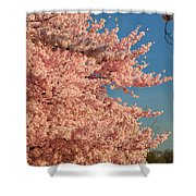 Cherry Blossoms 2013 - 013 Shower Curtain