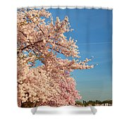 Cherry Blossoms 2013 - 014 Shower Curtain