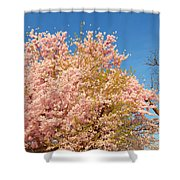 Cherry Blossoms 2013 - 016 Shower Curtain
