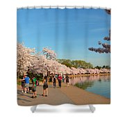 Cherry Blossoms 2013 - 020 Shower Curtain