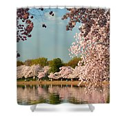 Cherry Blossoms 2013 - 023 Shower Curtain