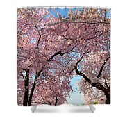 Cherry Blossoms 2013 - 025 Shower Curtain