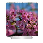 Cherry Blossoms 2013 - 031 Shower Curtain