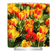 Cherry Blossoms 2013 - 032 Shower Curtain