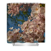 Cherry Blossoms 2013 - 035 Shower Curtain