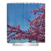 Cherry Blossoms 2013 - 037 Shower Curtain
