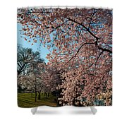 Cherry Blossoms 2013 - 038 Shower Curtain