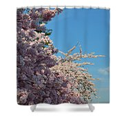 Cherry Blossoms 2013 - 046 Shower Curtain