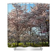 Cherry Blossoms 2013 - 049 Shower Curtain
