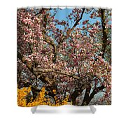 Cherry Blossoms 2013 - 051 Shower Curtain