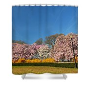Cherry Blossoms 2013 - 052 Shower Curtain