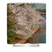 Cherry Blossoms 2013 - 053 Shower Curtain