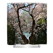 Cherry Blossoms 2013 - 056 Shower Curtain