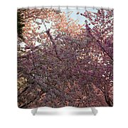 Cherry Blossoms 2013 - 065 Shower Curtain