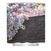 Cherry Blossoms 2013 - 066 Shower Curtain