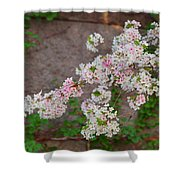 Cherry Blossoms 2013 - 067 Shower Curtain