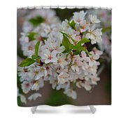 Cherry Blossoms 2013 - 068 Shower Curtain