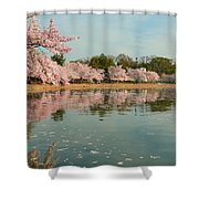 Cherry Blossoms 2013 - 083 Shower Curtain