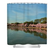 Cherry Blossoms 2013 - 087 Shower Curtain