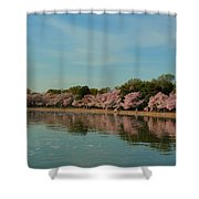 Cherry Blossoms 2013 - 088 Shower Curtain