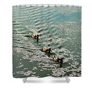 Cherry Blossoms 2013 - 090 Shower Curtain