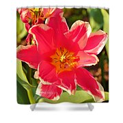 Cherry Blossoms 2013 - 093 Shower Curtain