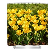 Cherry Blossoms 2013 - 094 Shower Curtain