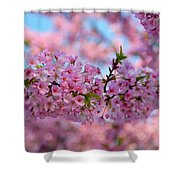 Cherry Blossoms 2013 - 095 Shower Curtain