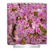 Cherry Blossoms 2013 - 096 Shower Curtain