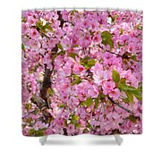 Cherry Blossoms 2013 - 097 Shower Curtain