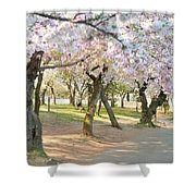 Cherry Blossoms 2013 - 099 Shower Curtain