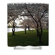 Cherry Blossoms Along The Potomac Shower Curtain