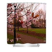 Cherry Blossoms At Kirkland In Kendal Shower Curtain
