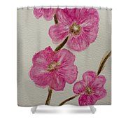 Cherry Blossoms Blooming  Shower Curtain