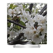 Cherry Blossoms Branching Out Shower Curtain