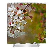 Cherry Blossoms Galore Shower Curtain
