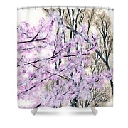 Cherry Blossoms In Spring Snow Shower Curtain